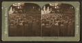 Herd of sheep in the Great Runways, Union Stock Yards (stockyards), Chicago, from Robert N. Dennis collection of stereoscopic views.png
