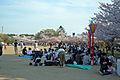Himeji castle April 12.jpg