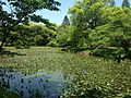 Hishigataike Pond in Usa Shrine 4.JPG