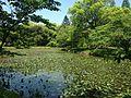 Hishigataike Pond in Usa Shrine 4.JPG