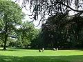 Hofgarten Düsseldorf - lawn.JPG