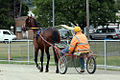 Horse Trotting (6700569509).jpg