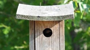 File:House wren in JBWR (50171).webm