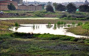 Fucha River - Image: Humedal Burro