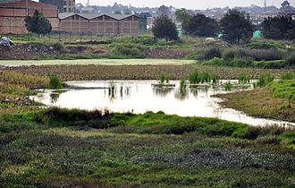 Lake Herrera - El Burro, similar wetland to Lake Herrera
