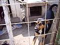 Hundelager Ungarn 2006 1.JPG