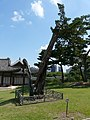 Hyehwa fall 2014 086 (Changgyeonggung).JPG