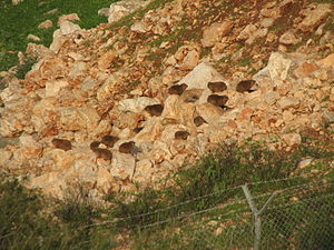 300px Hyrax colony Coneys, Rock Badgers, Hyraxs. What kind of critter are those?
