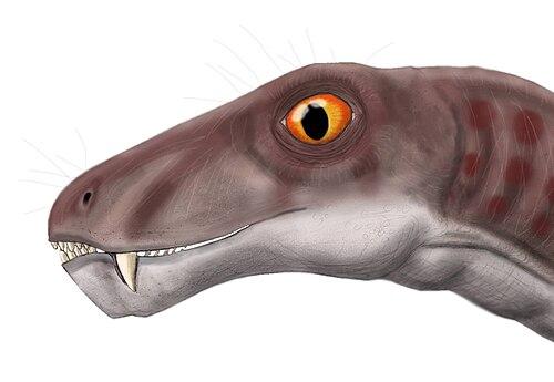 Ictidorhinus