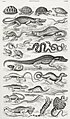 Illustration from A History of the Earth and Animated Nature by Oliver Goldsmith from rawpixel's own original edition of the publication 00041.jpg