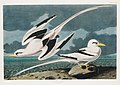Illustration from Birds of America (1827) by John James Audubon, digitally enhanced by rawpixel-com 263.jpg