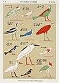 Illustration from Monuments de l'Egypte de la Nubie by Jean-François Champollion, digitally enhanced by rawpixel-com 61.jpg