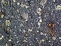 Impact breccia (Sandcherry Member, Onaping Formation, Paleoproterozoic, 1.85 Ga; High Falls roadcut, Sudbury Impact Structure, Ontario, Canada) 38 (47707270272).jpg