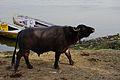 India DSC01033 (16722692345).jpg