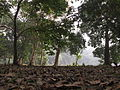 Indian Botanic Garden - Howrah 2012-01-29 1673.JPG