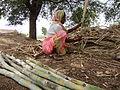 Indian Farmer.JPG