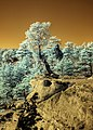 Infrared HDR Palmer Park Colorado Springs (3212865298).jpg