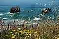 Islets, yellow poppies, grasses, rural California coastline, cliffs, overhang, waves, blue water, Pacific Ocean, north of Fort Bragg, California, USA.jpg