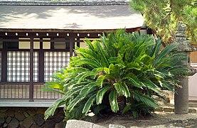 ItsukushimaBuildingSotetsu.jpg