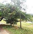 Itupeva - SP - panoramio (3365).jpg