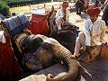 Jaipur, india (17007913).jpg