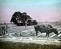 Japan-Farmer ploughing.jpg