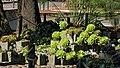 Jardín Botánico Mexico City 88.jpg