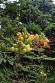 Jardim Botânico da Madeira DSC 0373 (14719770863).jpg