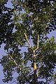 Jardim Botânico do Rio de Janeiro - 130715-1397-jikatu (9299694094).jpg