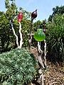 Jardins Rocambole, Corps-Nuds, France, 7-2019, dame-jeannes colorées recyclées en jardin potager.jpg