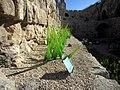 Jerusalem Glass grass stereo II (6036384272).jpg