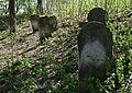 Jewish cemetery Zelechow IMGP3207.jpg