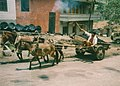 Jinjiang - Lijiang, horse and cart (6176926193).jpg