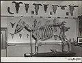 Jubilea, tentoonstellingen, dieren, Landbouw Hogeschool, Bestanddeelnr 050-1052.jpg