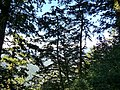 Juniper Valley 檜谷 - panoramio.jpg