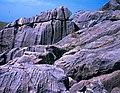 Jurassic stones from Burj el Maleh Israel.jpg