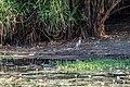 Kakadu (AU), Kakadu National Park, Yellow Water -- 2019 -- 4030.jpg