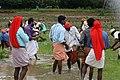 Kambala Dance (കംബള നൃത്തം) 04.jpg
