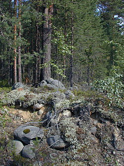 http://upload.wikimedia.org/wikipedia/commons/thumb/8/86/KarelianForest.jpg/250px-KarelianForest.jpg