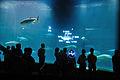 Kasai Rinkai Aquarium 01.jpg
