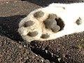 Kat - Katze - Cat - Chat - panoramio - Hänsel und Gretel.jpg