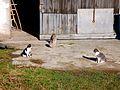 Katzen gegenüber 178.jpg