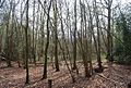 Kemp's Wood - geograph.org.uk - 1251999.jpg