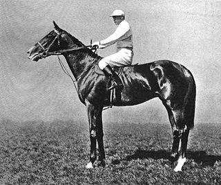 Kennymore British Thoroughbred racehorse
