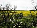 Khalep'ya, Kyivs'ka oblast, Ukraine, 08741 - panoramio (12).jpg