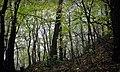 Khalep'ya, Kyivs'ka oblast, Ukraine, 08741 - panoramio (7).jpg