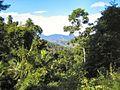 Killabakh to Comboyne Palm Forest - panoramio.jpg