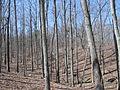 Kings Mountain National Military Park - South Carolina (8558895262) (2).jpg