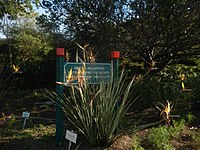 Kirstenbosch National Botanical Garden by ArmAg (25).jpg