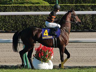 Kitasan Black Japanese-bred Thoroughbred racehorse
